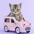 Kitten In Pink Car by Greg Cuddiford