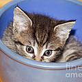 Kitten by Michal Boubin