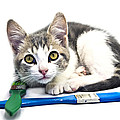 Kitten With Paint Brushes by Susan Leggett