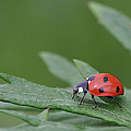 Lady Bird by Dreamland Media