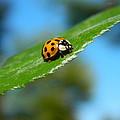 Lady Bug by Nicki Bennett