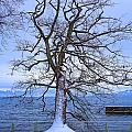 Lake Constance by Mhiss Little
