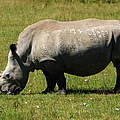 Lake Nakuru White Rhinoceros by Aidan Moran