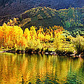 Lake Reflection In Fall  by OLena Art Brand