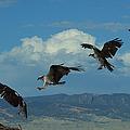Landing Pattern Of The Osprey by Ernie Echols