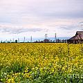 Landscape 22 P Sac Ca by Otri Park