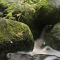 Landscape Of Becky Falls Waterfall In Dartmoor National Park Eng by Matthew Gibson