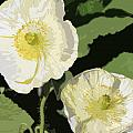 Large White Flowers Abstract by Mark Steven Burhart