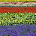 Lavender Farm, Furano, Hokkaido by Keren Su