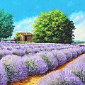 Lavender Lines by Jean-Marc Janiaczyk