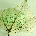 Leaf With Green Drops by Mats Silvan