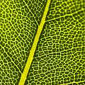 Leafy Details by Jorgo Photography - Wall Art Gallery