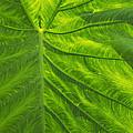 Leafy Green by Ann Horn