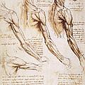 Leonardo: Anatomy, 1510 by Granger