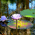 Lily Pond by Anita Lewis