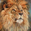 Lion by David Stribbling