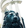 Lion by Lali Kacharava