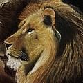 Lion Of Judah by Dale Bradley
