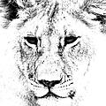 Lion Portrait by Aidan Moran