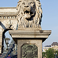 Lion Sculpture On Chain Bridge In Budapest by Artur Bogacki