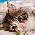 Little Cat Kitten by Doreen Zorn