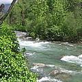 Little Susitna River  by Terri Pfister