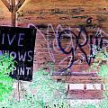 Live Minnows by Dietrich ralph  Katz