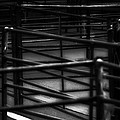 Livestock Market - In The Peak District In Great Britain by Doc Braham