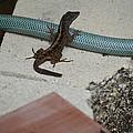 Lizard by Linda Kerkau