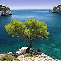 Lone Pine Tree by Brian Jannsen