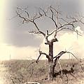 Lone Tree by HW Kateley