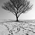Lone Tree Winter by Julia Gavin