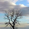 Lone Tree by Yumi Johnson