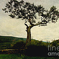 Lonely Tree by Trina  Ansel