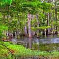 Louisiana Bayou by Ester  Rogers