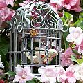 Love Bird by Emma Manners