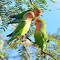 Lovebirds by Eduardo  Dinero