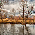 Lower Owens River by Cat Connor