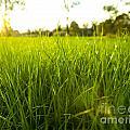 Lush Grass by Tim Hester