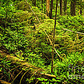 Lush Temperate Rainforest by Elena Elisseeva