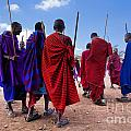 Maasai Men In Their Ritual Dance In Their Village In Tanzania by Michal Bednarek