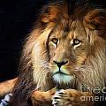 Magnificent Lion by Sheila Smart Fine Art Photography