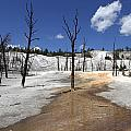 Mammoth Hot Spring Area by Christiane Schulze Art And Photography