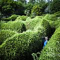Man Lost Inside A Maze Or Labyrinth by Jorgo Photography - Wall Art Gallery