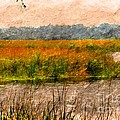 Marsh Land by Kathleen Struckle