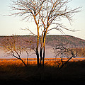 Marsh Tree Reflections by Jeff Galbraith