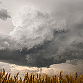 Marshmallow - Bubbling Storm Cloud Over Wheat In Kansas by Sean Ramsey