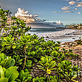 Maui Hawaii by Edward Fielding