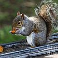 Meals On Rails by James Brunker