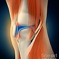 Medical Illustration Showing by Stocktrek Images